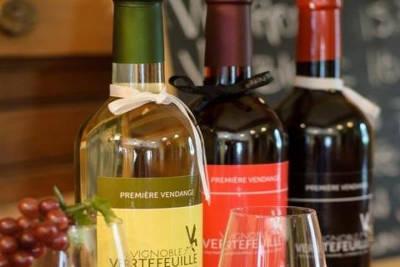 Vignoble-Vertefeuille_vin